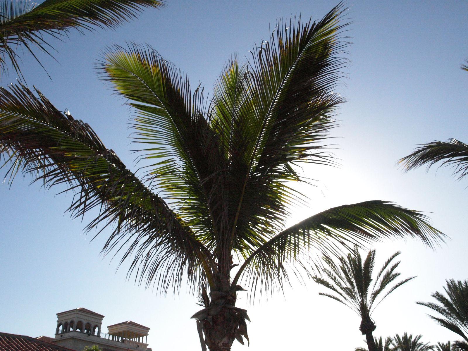 Plants-Trees_Photo_Texture_B_P5224076