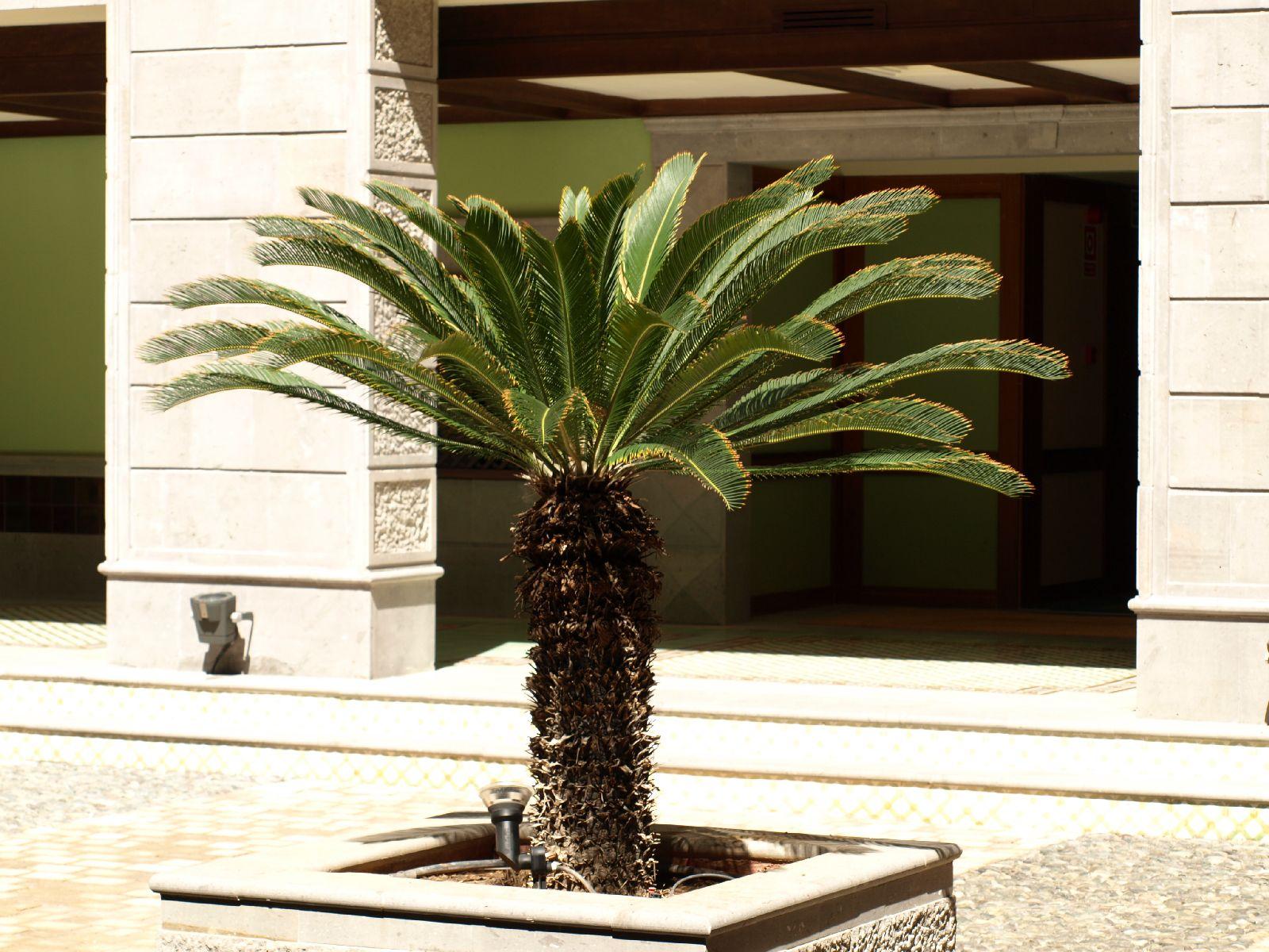 Plants-Trees_Photo_Texture_B_P5234757