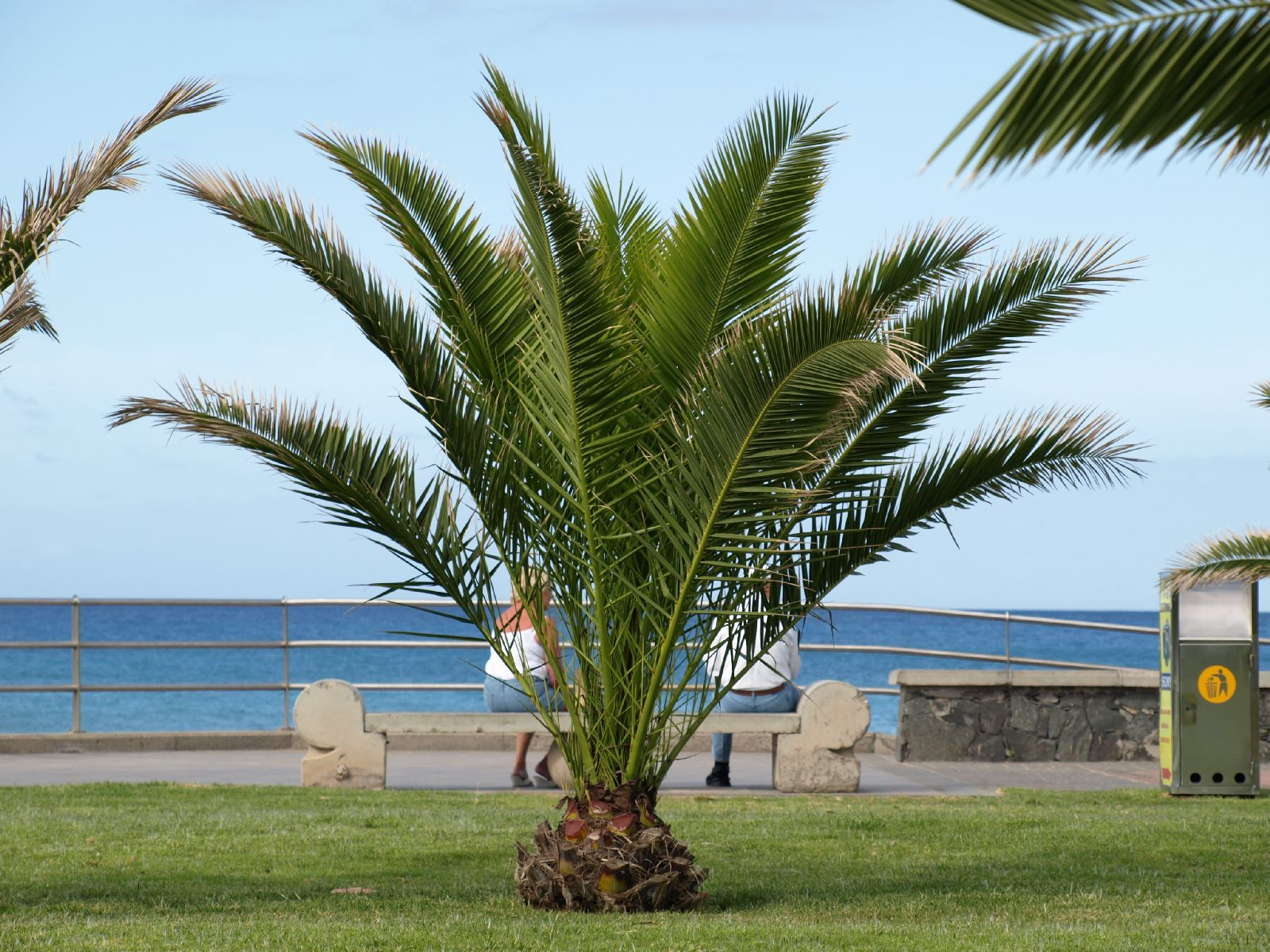 Plants-Trees_Photo_Texture_B_P5265040