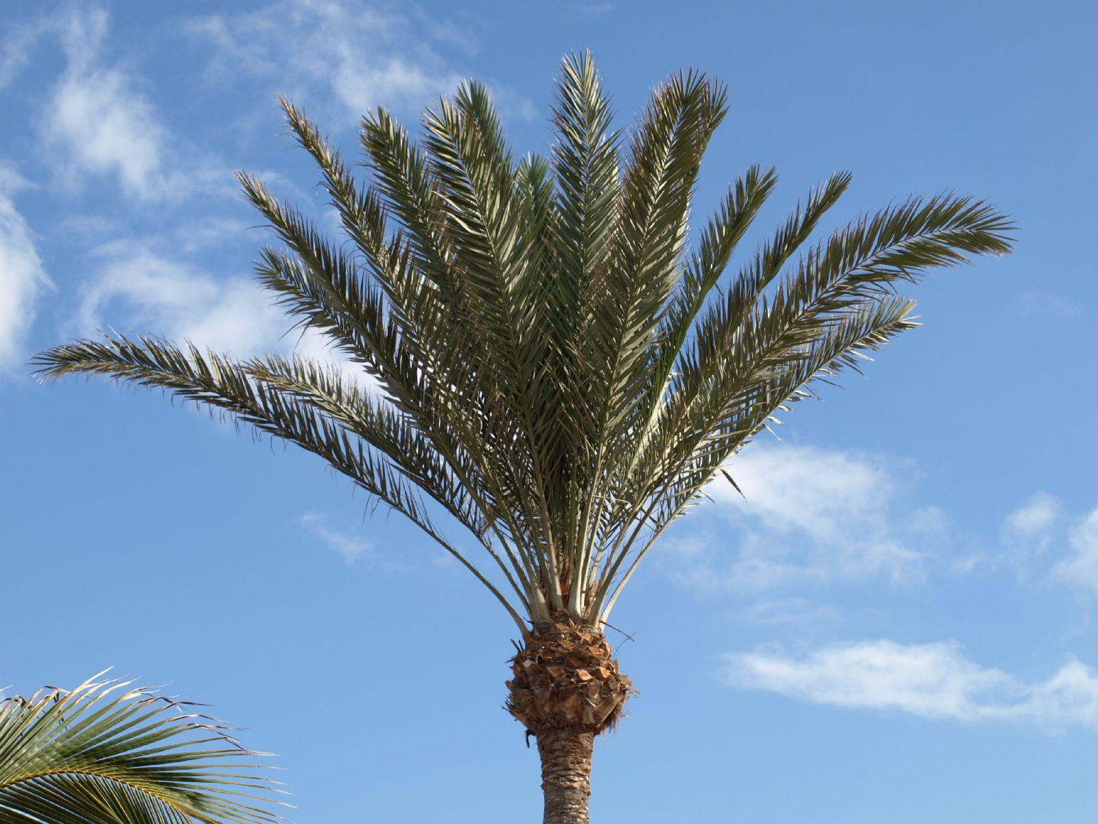 Plants-Trees_Photo_Texture_B_P5265051