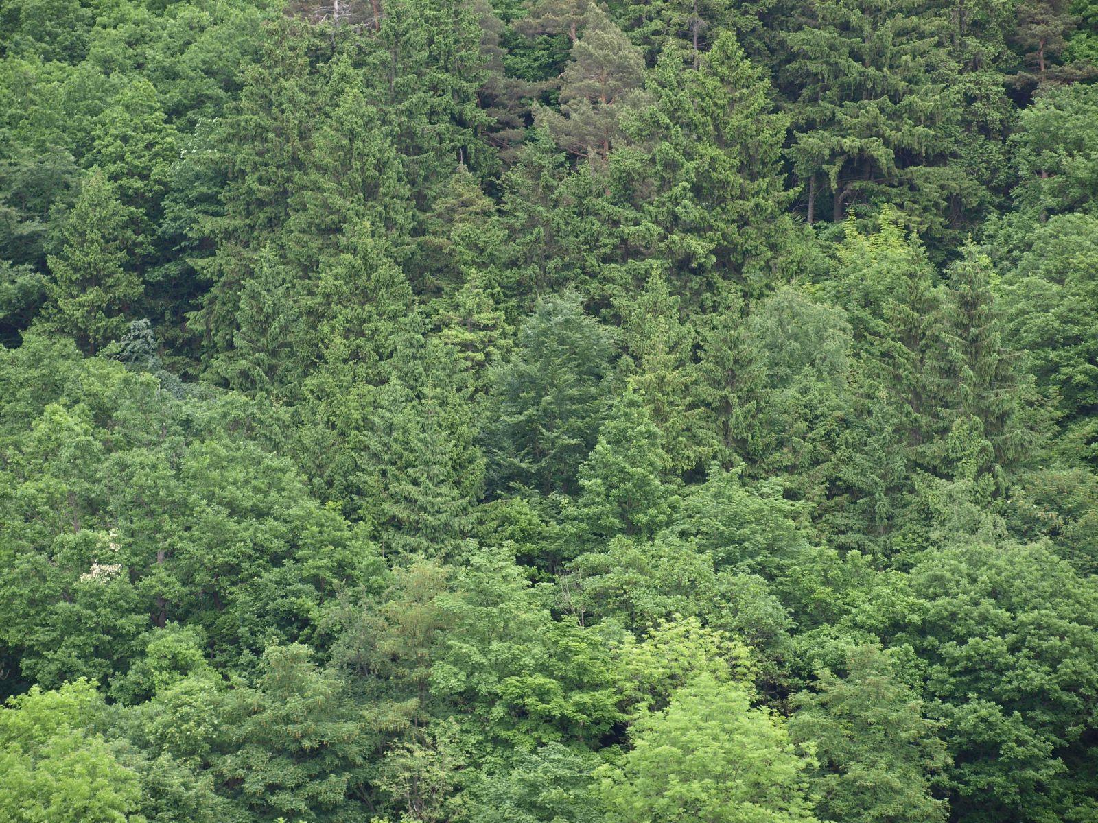 Plants-Trees_Photo_Texture_B_P6036442