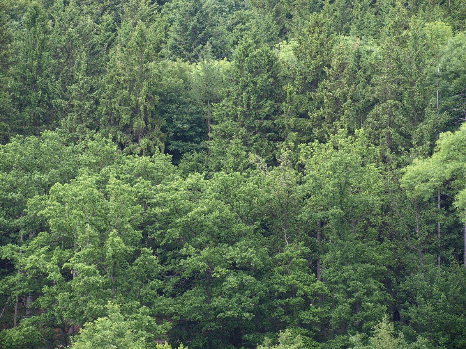 Plants-Trees_Photo_Texture_B_P6036443