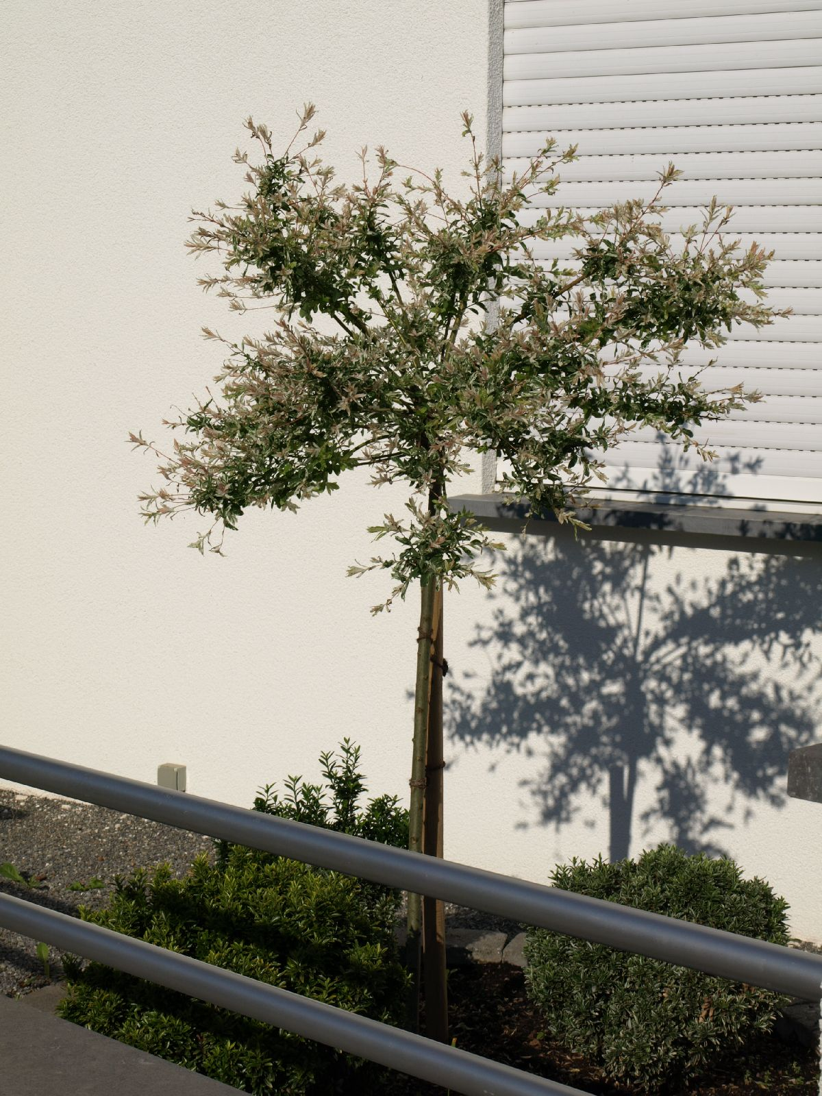 Plants-Trees_Photo_Texture_B_P6153456
