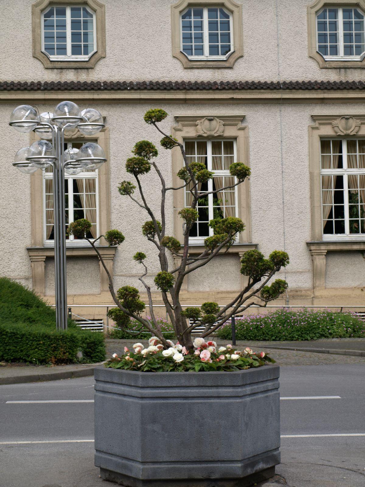 Plants-Trees_Photo_Texture_B_P6153501
