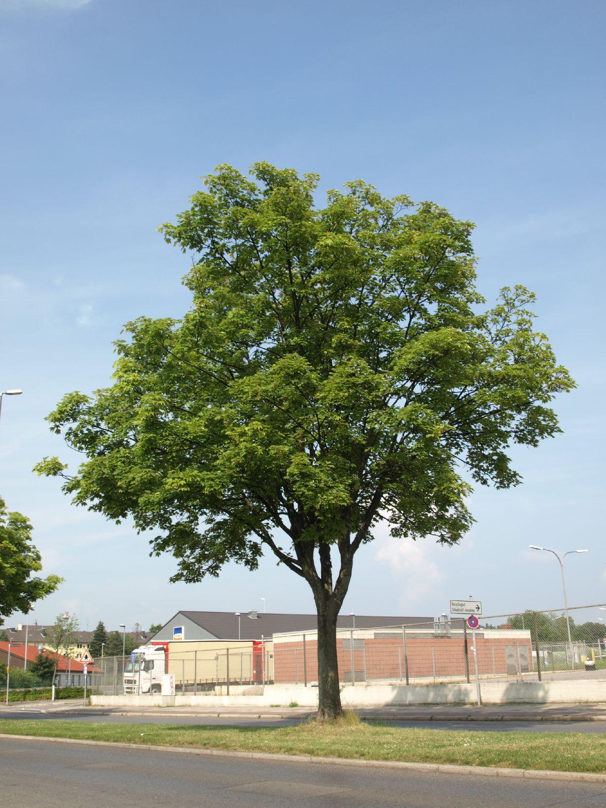 Plants-Trees_Photo_Texture_B_P6288483