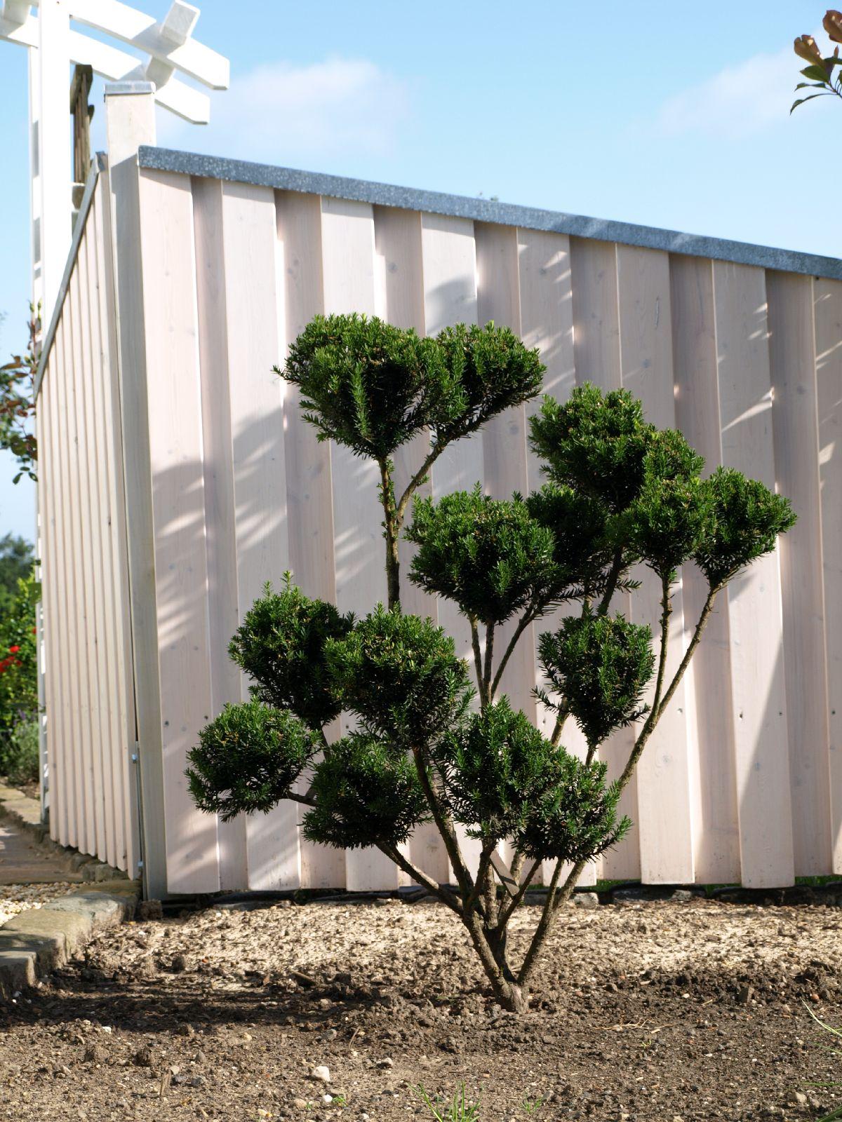 Plants-Trees_Photo_Texture_B_P6293856