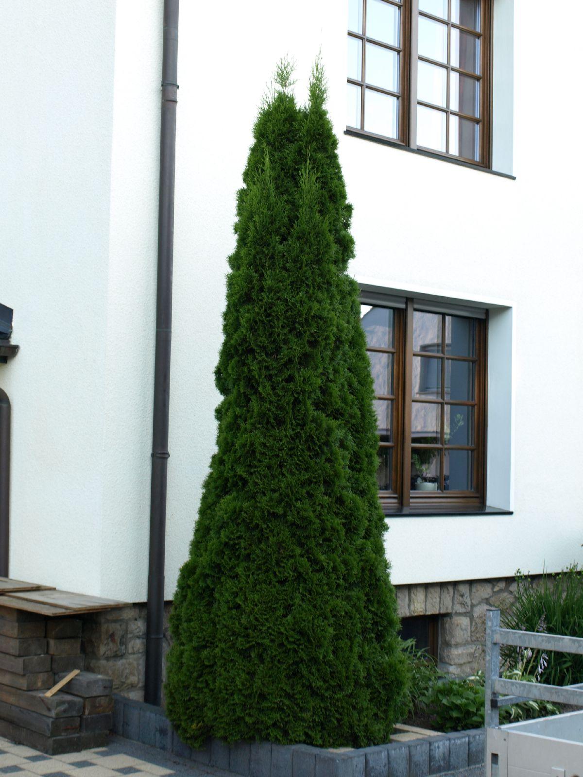 Plants-Trees_Photo_Texture_B_P7023872