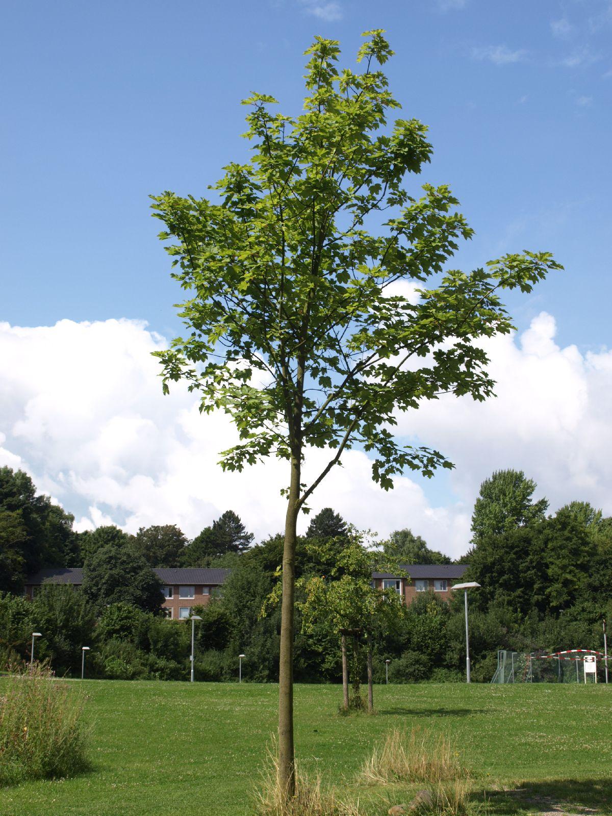 Plants-Trees_Photo_Texture_B_P7258808