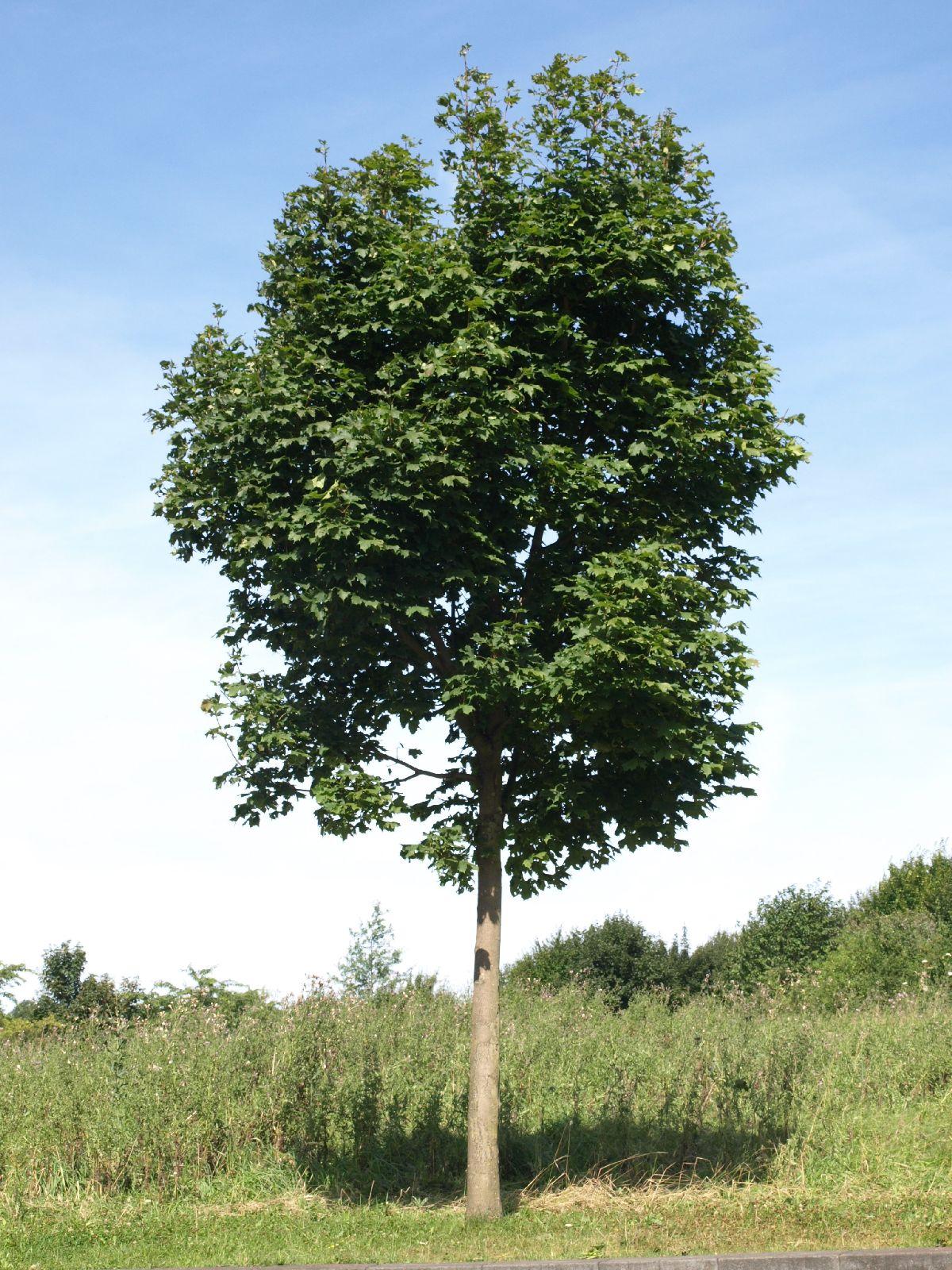 Plants-Trees_Photo_Texture_B_P7268890