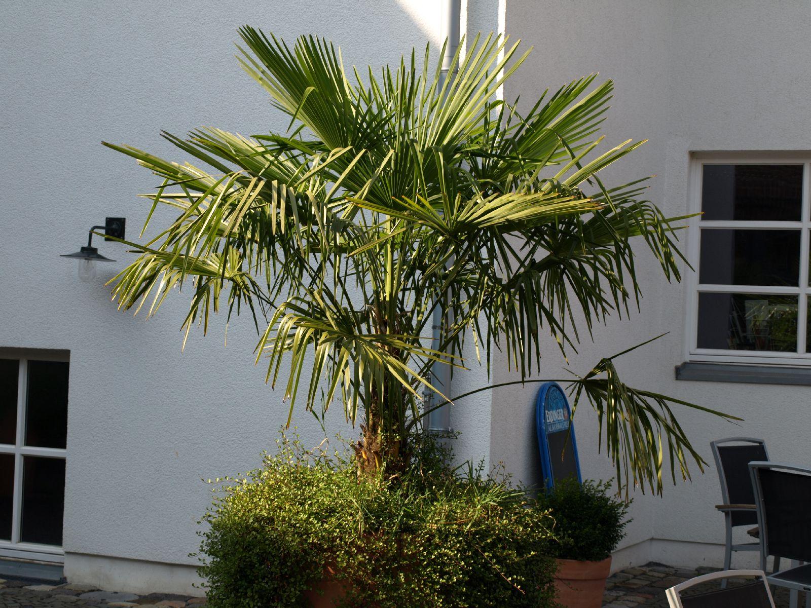 Plants-Trees_Photo_Texture_B_P9205290
