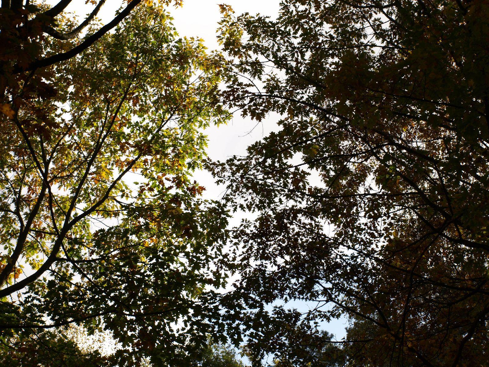 Plants-Trees_Photo_Texture_B_PA250517
