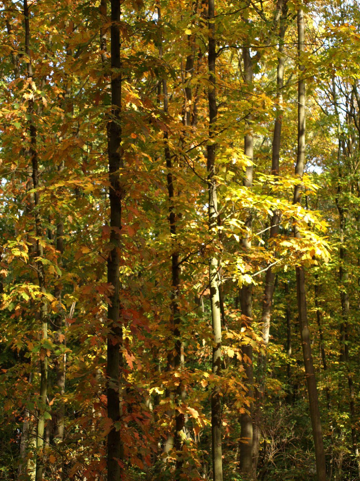 Plants-Trees_Photo_Texture_B_PA250518