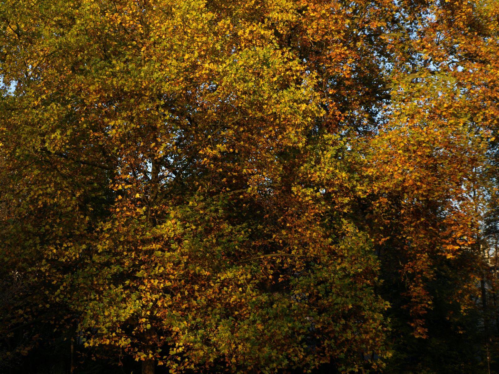 Plants-Trees_Photo_Texture_B_PA256302