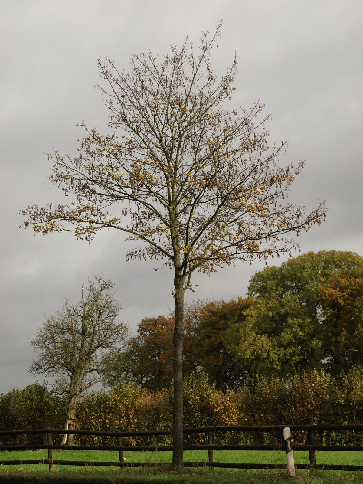 Plants-Trees_Photo_Texture_B_PA260546