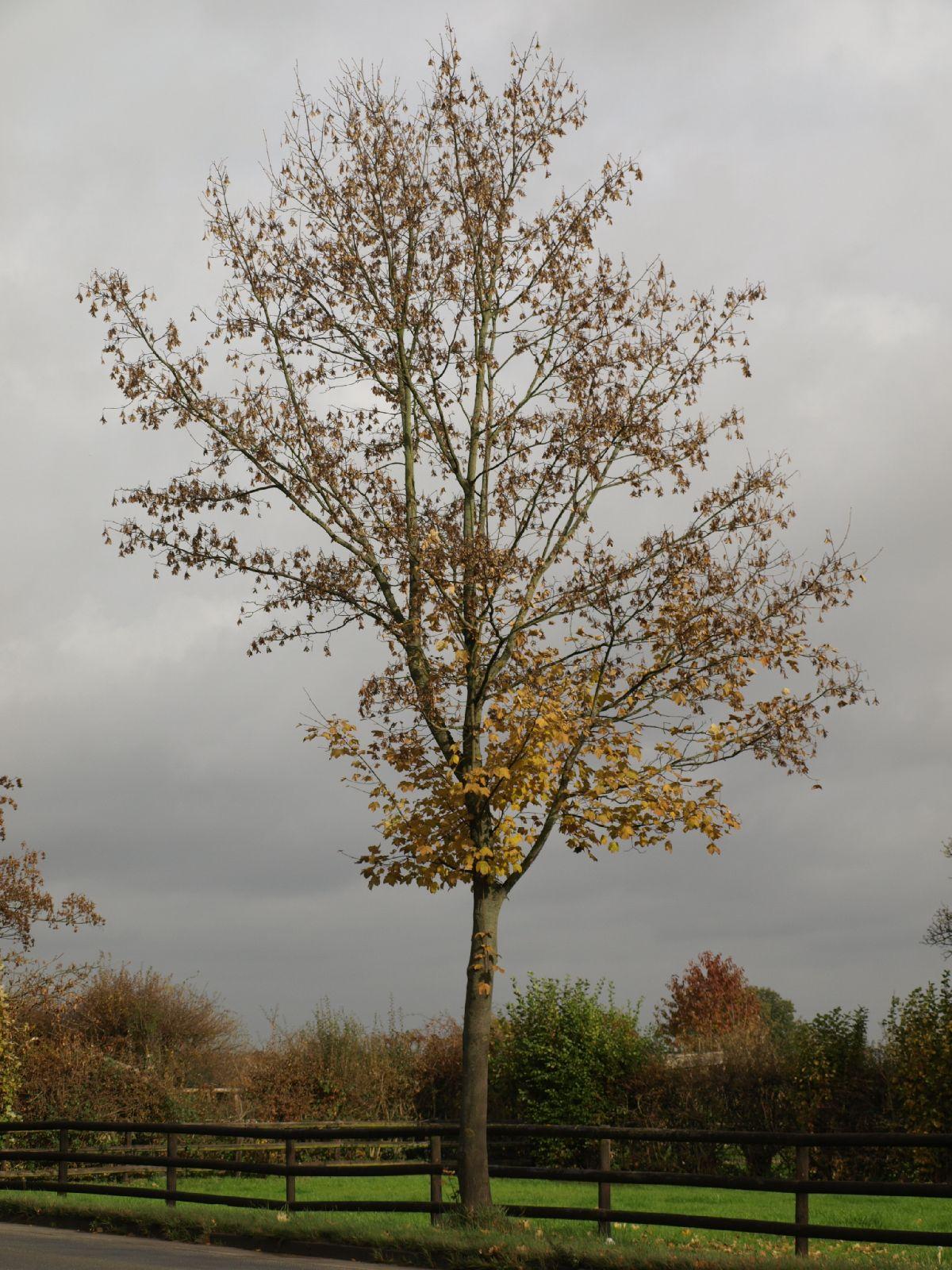 Plants-Trees_Photo_Texture_B_PA260548
