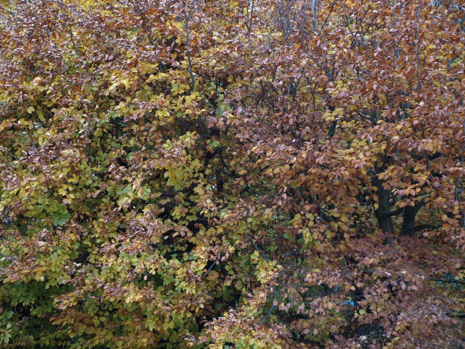 Plants-Trees_Photo_Texture_B_PB026432