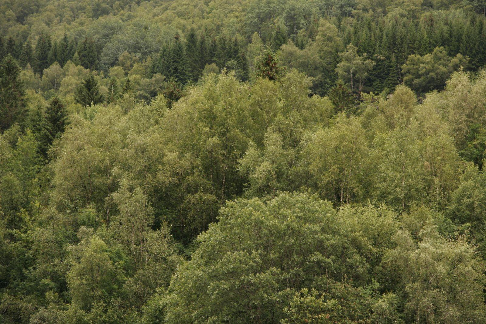 Plants-Trees_Photo_Texture_B__MG_2616