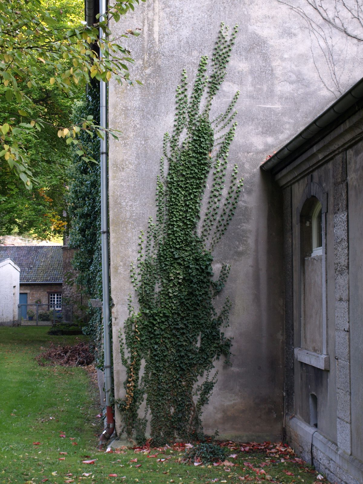 Plants-Various_Photo_Texture_B_P9285575