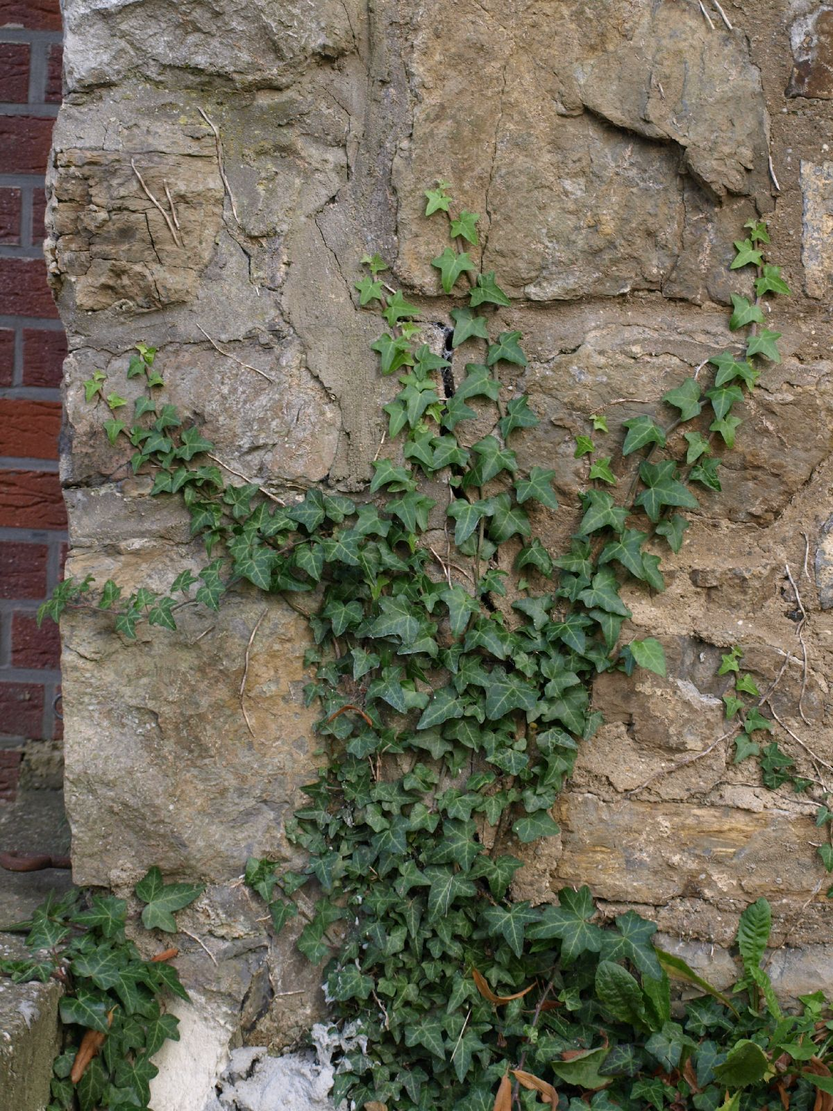 Plants-Various_Photo_Texture_B_P9285586