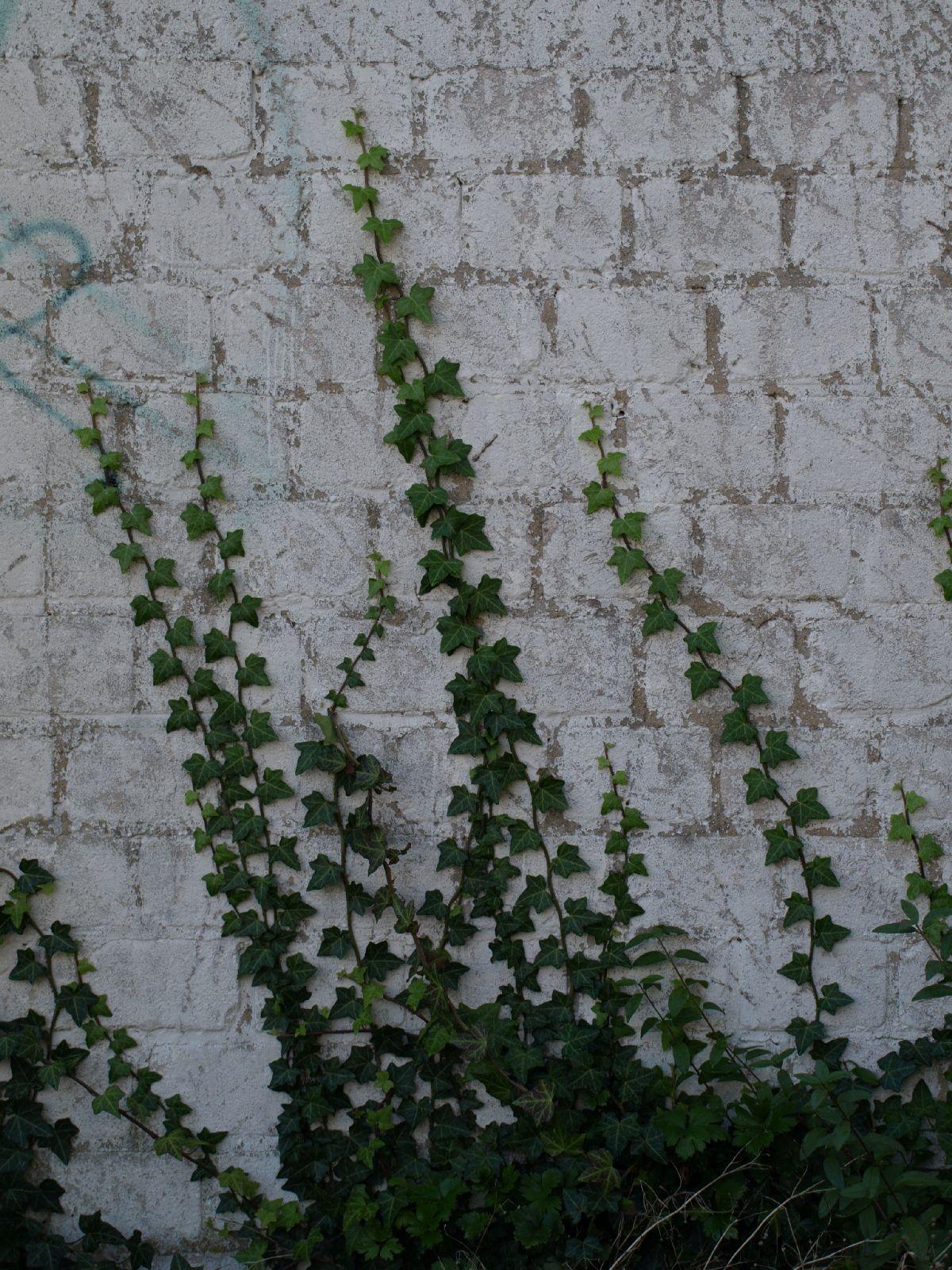 Plants-Various_Photo_Texture_B_PA035668