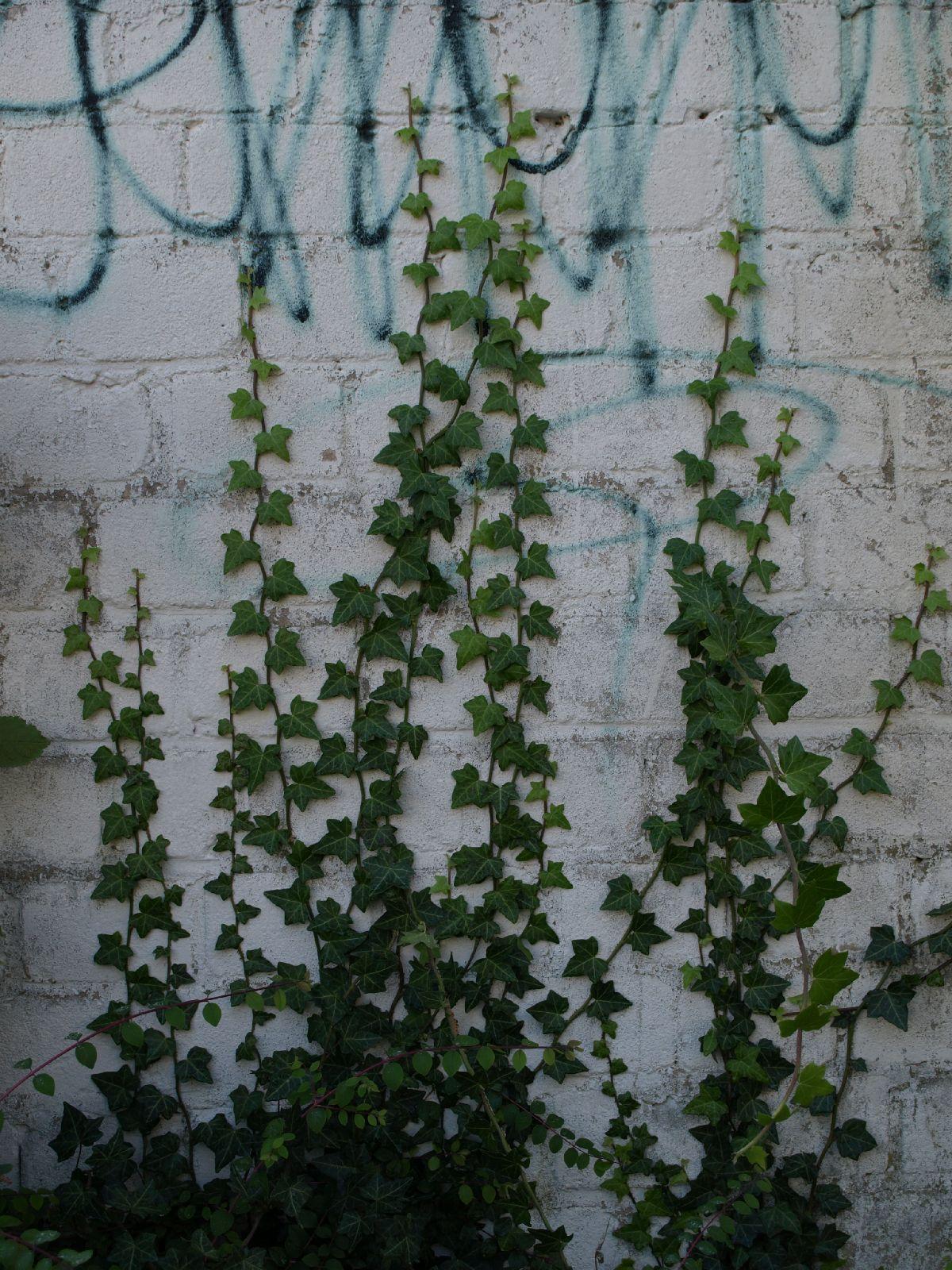 Plants-Various_Photo_Texture_B_PA035669