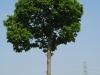 Plants-Trees_Photo_Texture_B_00250