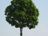 Plants-Trees_Photo_Texture_B_00260