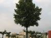 Plants-Trees_Photo_Texture_B_01730