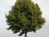 Plants-Trees_Photo_Texture_B_03240