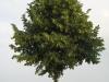 Plants-Trees_Photo_Texture_B_03260