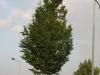 Plants-Trees_Photo_Texture_B_03290
