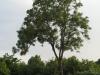 Plants-Trees_Photo_Texture_B_03340