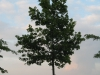 Plants-Trees_Photo_Texture_B_03520