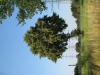 Plants-Trees_Photo_Texture_B_1170