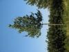 Plants-Trees_Photo_Texture_B_1177