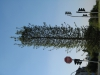 Plants-Trees_Photo_Texture_B_1181