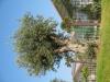 Plants-Trees_Photo_Texture_B_1197