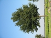 Plants-Trees_Photo_Texture_B_1201