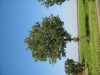 Plants-Trees_Photo_Texture_B_1204