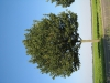 Plants-Trees_Photo_Texture_B_1208