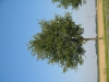 Plants-Trees_Photo_Texture_B_1223