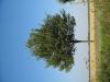 Plants-Trees_Photo_Texture_B_1225