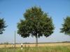 Plants-Trees_Photo_Texture_B_1226