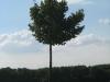 Plants-Trees_Photo_Texture_B_26890