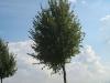 Plants-Trees_Photo_Texture_B_26940