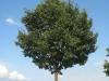 Plants-Trees_Photo_Texture_B_26980