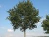 Plants-Trees_Photo_Texture_B_27110
