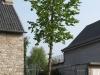 Plants-Trees_Photo_Texture_B_P4222589