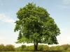 Plants-Trees_Photo_Texture_B_P4302889