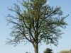 Plants-Trees_Photo_Texture_B_P5032261